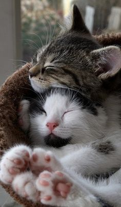 Saturday Snuggles!  Happy Caturday Saturday. Drink lots of coffee and pin away. Have a good day.