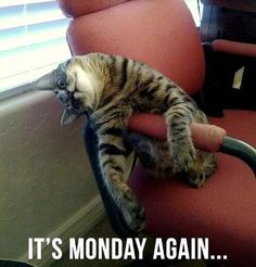 why does monday have to come so often? (originally seen by @Leisatmv660 )