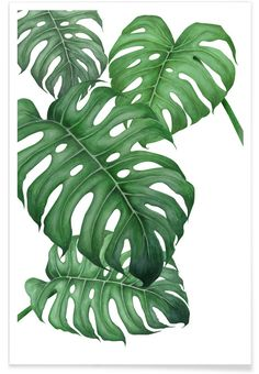 Tropical No.2 als Premium Poster door typealive | JUNIQE