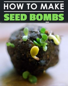 DIY Garden Seed Bombs - get ready for an explosion in your garden... #gardening #homestead #homesteading