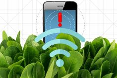 MIT researchers have engineered a bionic plant that can detect explosives and send a warning signal — without wires! — to scientists nearby.  Talk about spinach as superfood, Popeye!