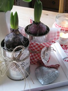 Hyacints and DIY flowercontainers. Simple christmas decor.