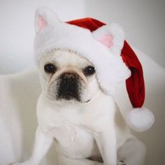 santa paws is coming to town! 🎅🐾 @piggyandpolly (shop link in bio)