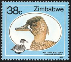 White-backed Duck stamps - mainly images - gallery format