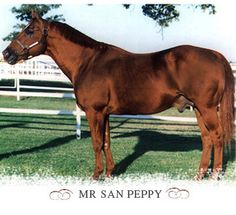 Photo of Quarter Horse (Mr. San Peppy)