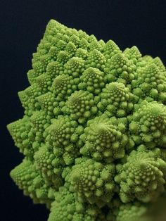 The head of Romanesco broccoli is a striking example of an approximate fractal…