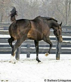 Get all horse race related news & updates daily. Zenyatta Horse, Thoroughbred Horse, Breyer Horses, Clydesdale Horses, All The Pretty Horses, Beautiful Horses, Show Horses, Race Horses, Horse Racing Results