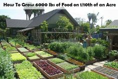 How To Grow 6000 lbs of Food on 1/10th of an Acre | http://www.diyideasbyyou.com/how-to-grow-6000-lbs-of-food-on-110th-of-an-acre/
