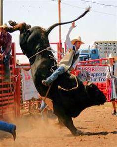 Bull Rider Reining barrel racing rodeo western ranch cowboy cowgirl farm show performance equine horse equestrian pony quarter charro vaquero gymkhana sliding stop cutting cowhorse prca