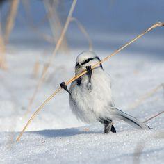 Hilarious Wildlife Photos   Nature - BabaMail