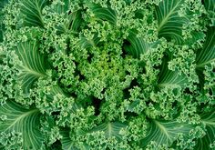 Why You Need Kale, Now!