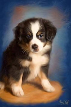 Corel painting of miniature Australian Shepherd. Pet Photography, Australian Shepherd, Jackson, Miniature, Pets, Painting, Animals, Red Tri Australian Shepherd, Animals And Pets