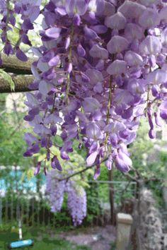 beautiful purple - France