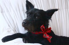 ADOPTED raven looking for you!!  so very cute.  6.15. 2012 available.  http://www.luckypupdogrescue.com san diego,  she's a california gurl
