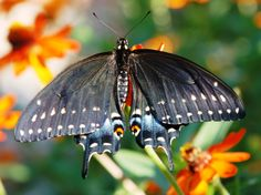 Loving Nature's Garden: Offers tips about growing food, watching birds and butterflies, and spending more time enjoying the outdoors.