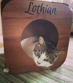 Yay!  we're so pleased Lothian likes his pod  he is so cute in there   #cat #catsofinstagram #cats_of_instagram #catfurnature #catfurniture #catsinboxes #cattoy #INSTACAT_MEOWS #cutecat #PurrMachine #catsinboxes #catbox #Excellent_Cats #BestMeow #dailykittymail #thecatniptimes #catcube #catpod #ArchNemesis #FlyingArchNemesis #myindoorpaws #ififitsisits #cutecatcrew #catchalet #catnip #themeowdaily #kitty #dailykittymail #catgrass