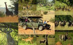 KWAGGA'S PRIDE laat jy die gejaag en druk van die stad agter en kom ontspan in die stilte van die natuur met jou gesin en beleef gasvryheid soos nog nooit tevore nie.  Kwagga's Pride is slegs 'n halfuur se ry vanaf Pretoria.  Die kampplek is netjies ingerig en die bestuur baie vriendelik! Daar is sowat 10 kampplekke beskikbaar Pretoria, Trail Running, Monster Trucks, Pride, Hiking, Adventure, Outdoor, Walks, Outdoors
