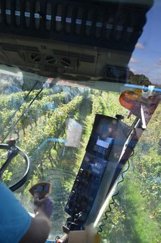 View from Machine Harvester in action