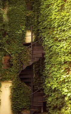 """Ivy Staircase"".. Dublin, Ireland"