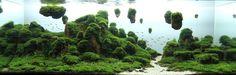Des paysages d'aquariums                                                                                                                                                                                 Plus