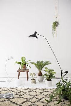 Llena tu casa de plantas y crea un hogar más acogedor. #Viviz