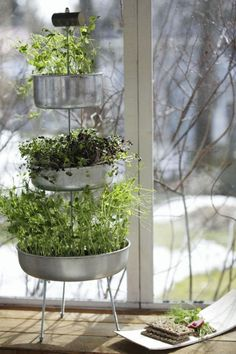 Versoja ikkunalaudalta | Viherpiha