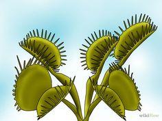 Cria de venus atrapamoscas