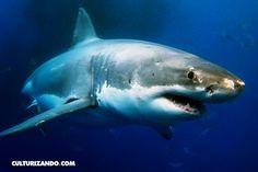 Fobias: «Selacofobia» miedo a los tiburones