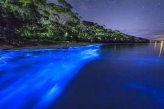 Andy Hutchinson   Some Kind of Blue - BioLuminescent Plankton ...
