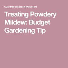 Treating Powdery Mildew: Budget Gardening Tip