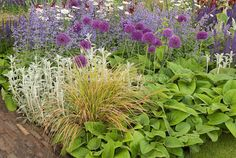 Allium, Nepta nepitella, Veronica, graminacee ornamentali, Stachys, Salvia, in lavernder stupendo e viola tema di colore combinazione fiore messa a dimora di piante perenni e bulbi