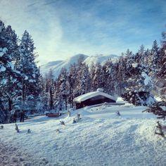 Winter in the Swiss National Park | Switzerland