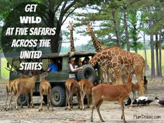 Get Wild at Five Safaris Across the United States via @Plum Deluxe
