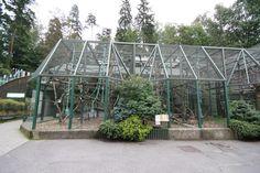 Something Creative with Bird Aviary Plans : Building Bird Aviary Plans. Big Bird Cage, Bird Types, Bird House Kits, Bird Aviary, How To Attract Birds, Budgies, Parrots, Backyard Birds, Parakeet