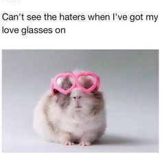 """""""Can't see the haters when I've got my love glasses on."""" """"Hatred stirs up strife, But love covers all transgressions."""" -Proverbs See them, pray for them, pray for God to give you the ability to love them as He does. Hamsters, Funny Animals, Cute Animals, Animal Funnies, Animal Memes, Baby Animals, Lol, Cute Memes, Funny Quotes"""