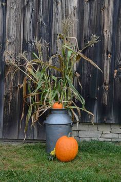 Pumpkins, corn stalks and a vintage milk can are used to decorate the outside of the Historic Barns of Nipmoose for a fall-themed wedding.