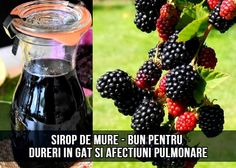Blackberry, Natural Remedies, Cooking, Food, Sport, Canning, Plant, Kitchen, Deporte