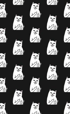 Instagram: @sublinhando Ripndip Wallpaper, Tumblr Backgrounds, Phone Backgrounds Funny, Funny Wallpapers, Cute Backgrounds, Wallpaper Backgrounds, Stussy Wallpaper, Black Wallpaper, Cat Pattern Wallpaper