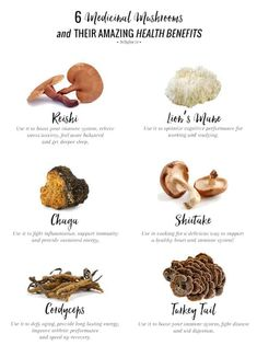 Herbal Medicine 6 Medicinal Mushrooms Their Amazing Health Benefits - A holistic nutritionist explains how to give your brain and body a boost with these 6 adaptogenic mushrooms (not the trippy kind! Calendula Benefits, Matcha Benefits, Lemon Benefits, Coconut Health Benefits, Tomato Nutrition, Stomach Ulcers, Holistic Nutritionist, Holistic Wellness, Stop Eating