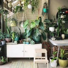 Urban Jungle - plants - vegetal - green mood