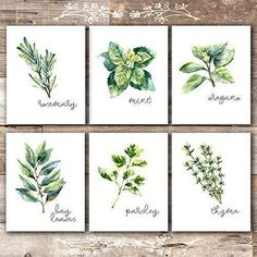 These art prints come UNFRAMED. Kitchen Herbs Art Prints – Botanical Prints – (Set of – Unframed – This set of kitchen art prints includes: rosemary, thyme, mint, p… Kitchen Herbs, Kitchen Decor, Kitchen Wall Decorations, Buy Kitchen, Kitchen Stuff, Rustic Kitchen, Kitchen Ideas, Kitchen Cabinets, Kitchen Art Prints