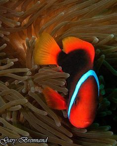 taken on a dive in the Philippines  #underwaterphotography #underwater #underwaterworld #underwaterphoto #underwaterpics #underwaterpictures #underwaterpic #natureaddictsun #naturelovers #nature #natureaddict #uwphotography #uwphoto #loves_underwater #lovediving #aquagallery #scuba #scubadiving #coral #greatbarrierreef #ocean #coralreef #diving #water #watercolor #uw #naturephotography #sea by garybrennand http://ift.tt/1UokkV2