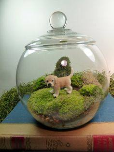 Small Covered Vase Terrarium Lab Dog Moss. by MossTerrariums