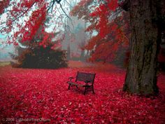 Park bench sitting in red leaves of autumn Autumn Tumblr, Beautiful World, Beautiful Places, Simply Beautiful, Beautiful Park, Romantic Places, Beautiful Scenery, Beautiful Landscapes, Images Wallpaper