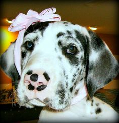 This is my sister, Sugar, as a baby. ~ RufiosRumblings.com