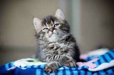 What could this awesome kitty be thinking about?