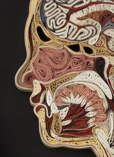 Anatomical Cross-Sections Made from Paper are Cool and Creepy
