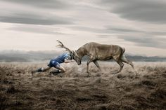 Article: An Art of Animal Advertising; Art of Ross Brown / Rugby Rugby League, Rugby Players, Pumas, Parkour, Koi, Rugby À Xiii, Images Aléatoires, Rugby Quotes, Man Vs Nature