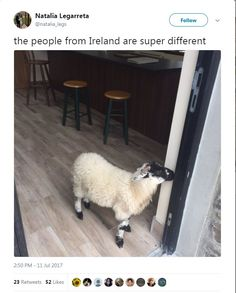 Funny Tweets About Animals — 17 Pics