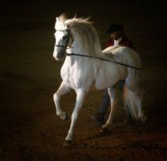 caballo 21